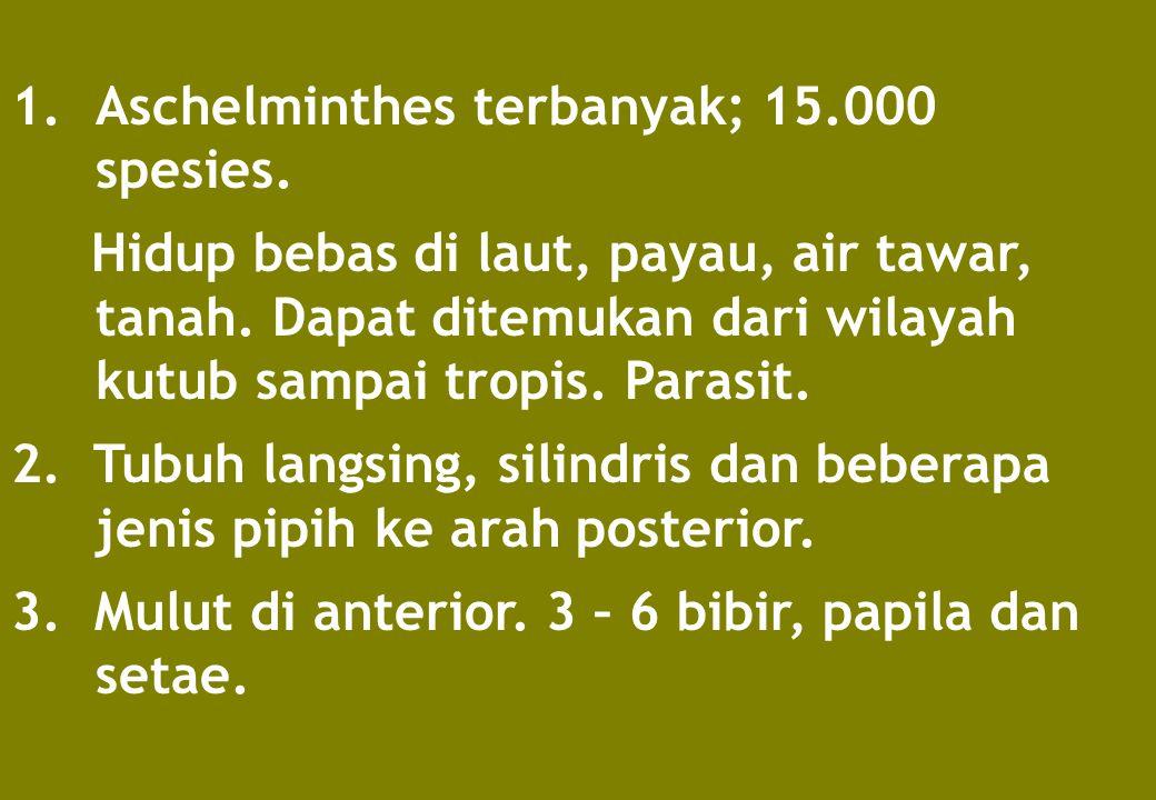 1.Aschelminthes terbanyak; 15.000 spesies. Hidup bebas di laut, payau, air tawar, tanah. Dapat ditemukan dari wilayah kutub sampai tropis. Parasit. 2.