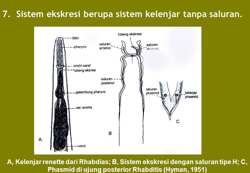 7. Sistem ekskresi berupa sistem kelenjar tanpa saluran. A, Kelenjar renette dari Rhabdias; B, Sistem ekskresi dengan saluran tipe H; C, Phasmid di uj