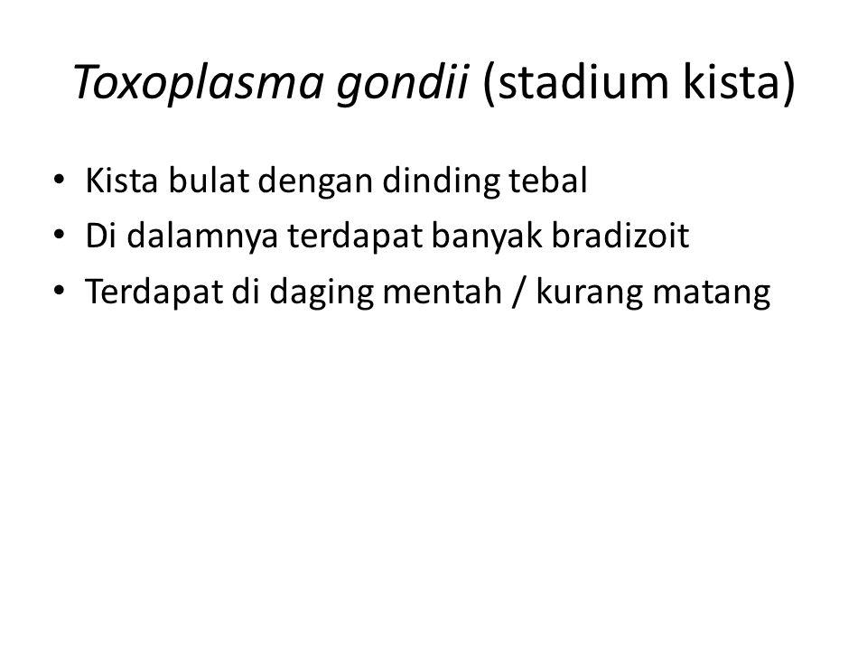 Toxoplasma gondii (stadium kista) Kista bulat dengan dinding tebal Di dalamnya terdapat banyak bradizoit Terdapat di daging mentah / kurang matang