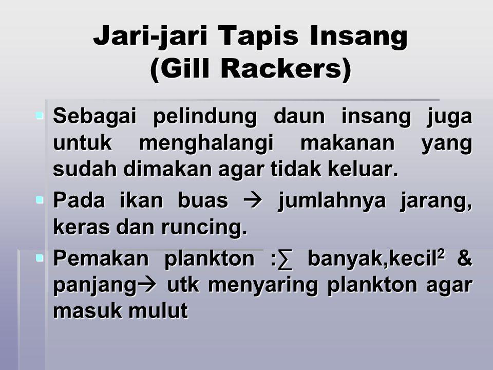 Jari-jari Tapis Insang (Gill Rackers)  Sebagai pelindung daun insang juga untuk menghalangi makanan yang sudah dimakan agar tidak keluar.  Pada ikan