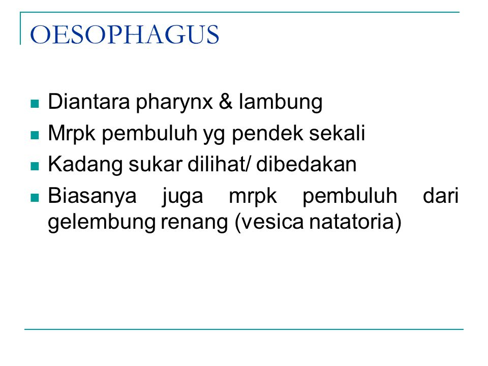 OESOPHAGUS Diantara pharynx & lambung Mrpk pembuluh yg pendek sekali Kadang sukar dilihat/ dibedakan Biasanya juga mrpk pembuluh dari gelembung renang