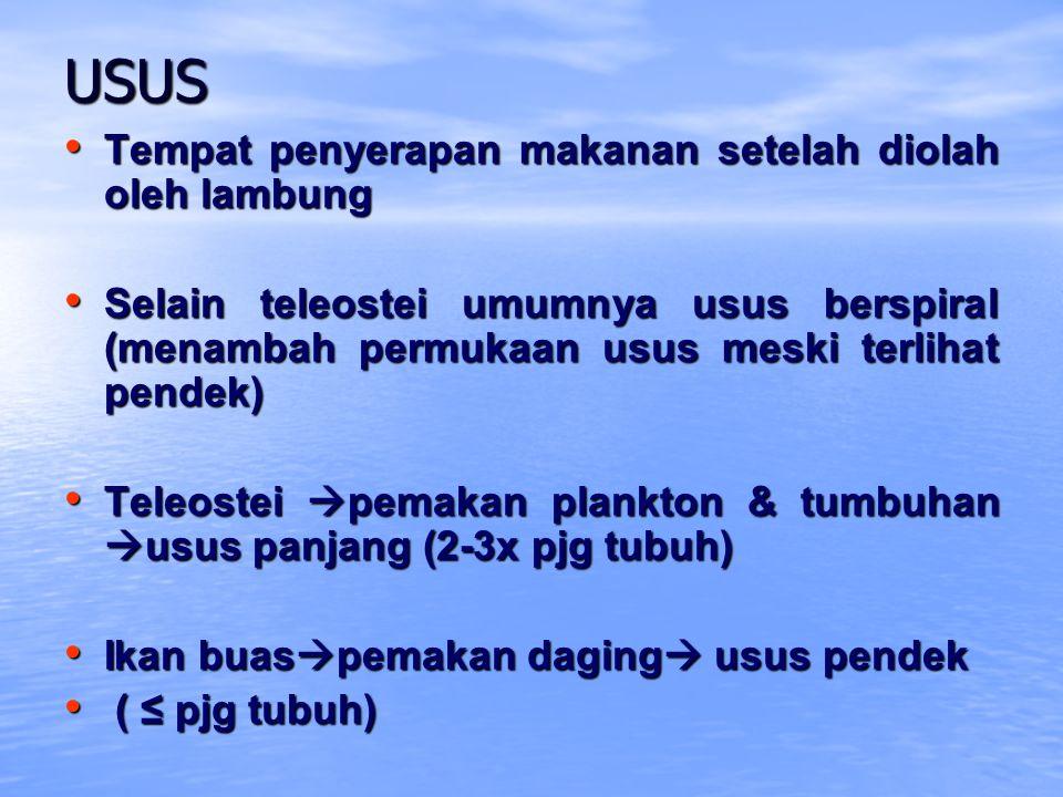USUS Tempat penyerapan makanan setelah diolah oleh lambung Tempat penyerapan makanan setelah diolah oleh lambung Selain teleostei umumnya usus berspir