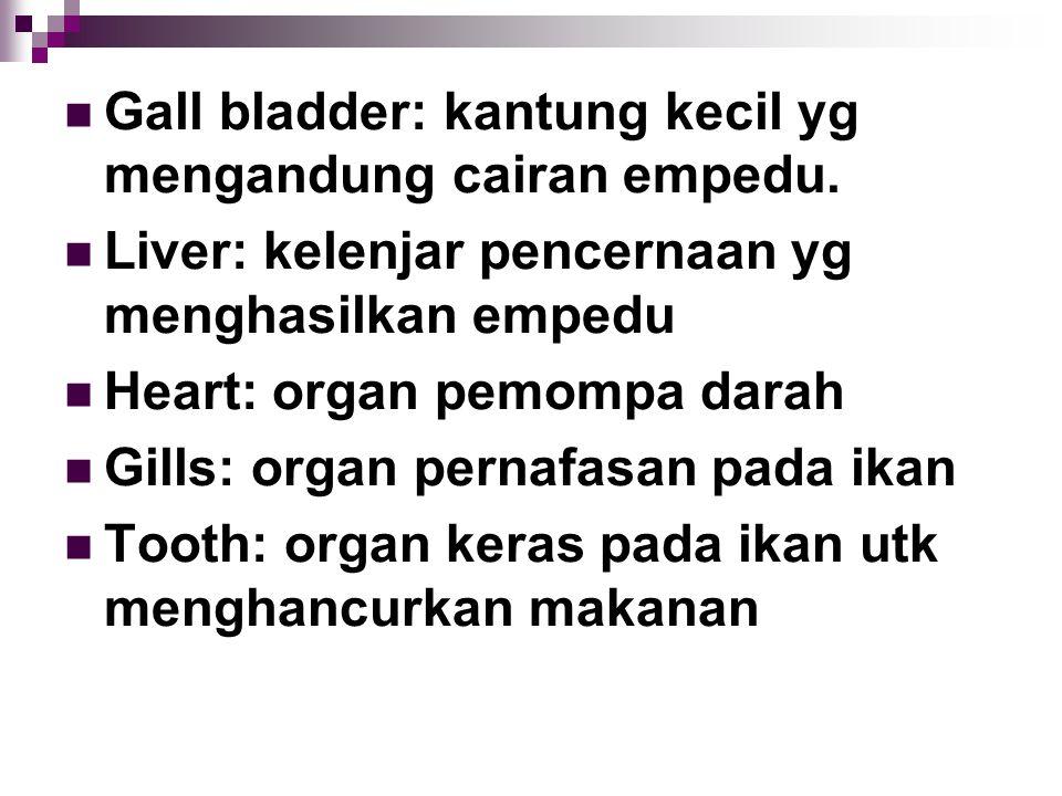 Gall bladder: kantung kecil yg mengandung cairan empedu. Liver: kelenjar pencernaan yg menghasilkan empedu Heart: organ pemompa darah Gills: organ per