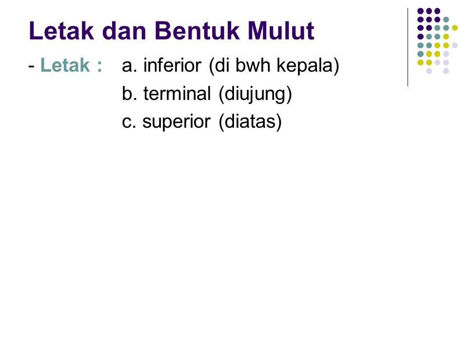 Letak dan Bentuk Mulut - Letak : a. inferior (di bwh kepala) b. terminal (diujung) c. superior (diatas)