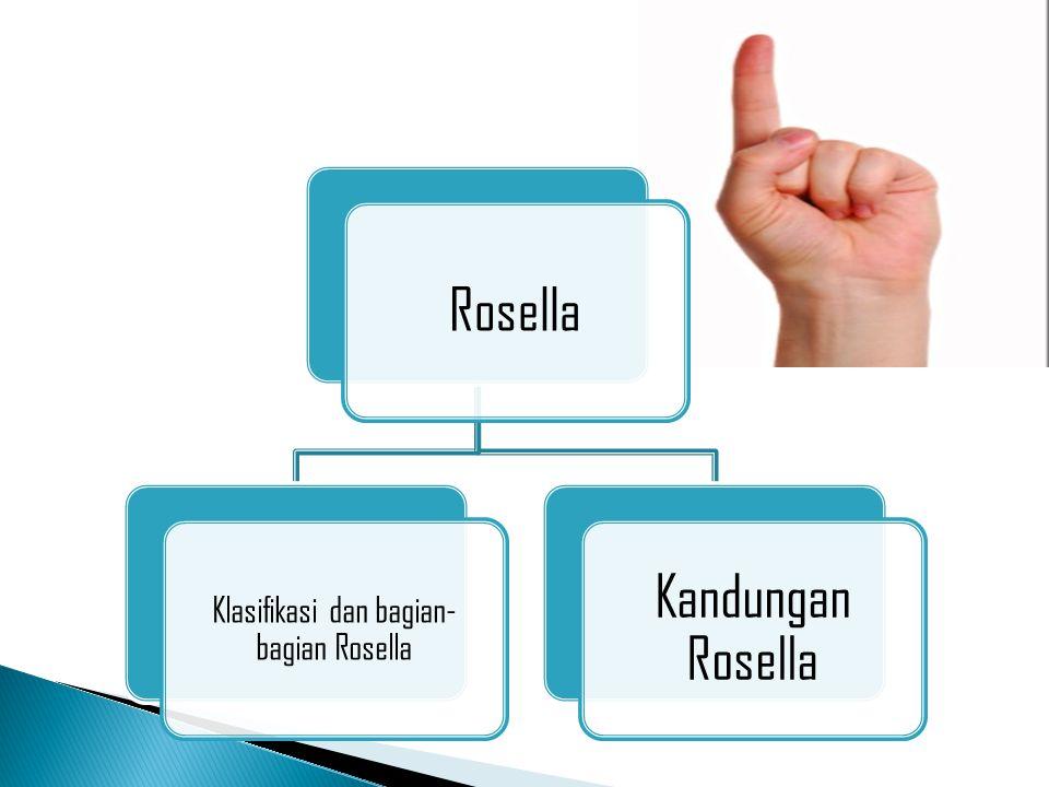 Rosella Klasifikasi dan bagian- bagian Rosella Kandungan Rosella