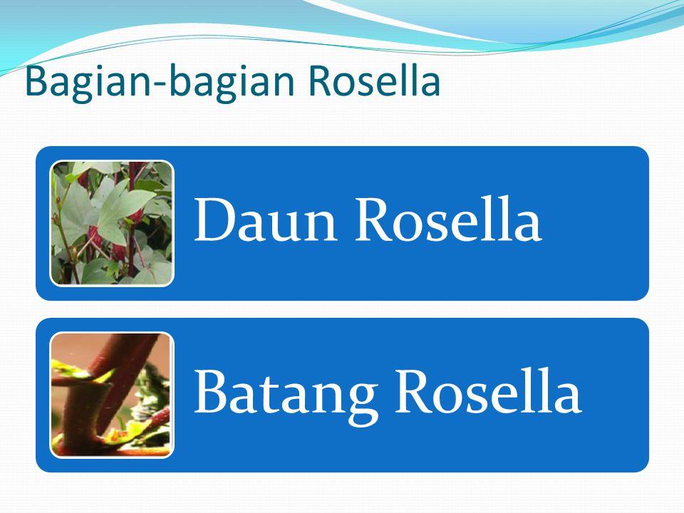 Klasifikasi Rosella Kingdom : Plantae (tumbuhan) Subkingdom : Tracheobionta (berpembuluh) Superdivisio : Spermatophyta (menghasilkan biji) Divisio : M