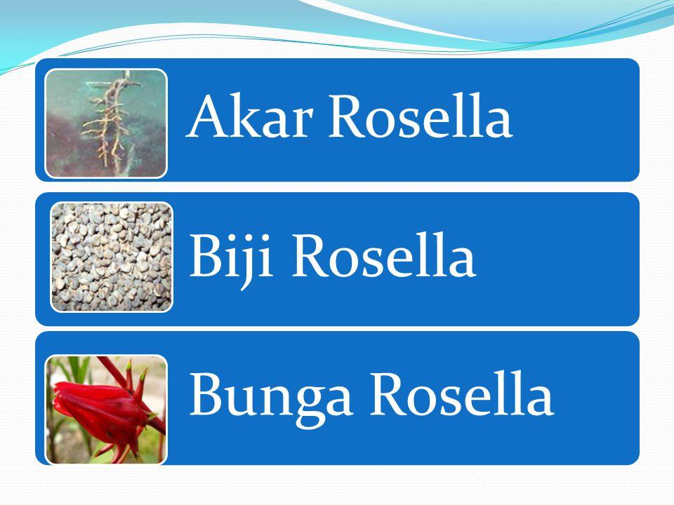 Bagian-bagian Rosella Daun Rosella Batang Rosella