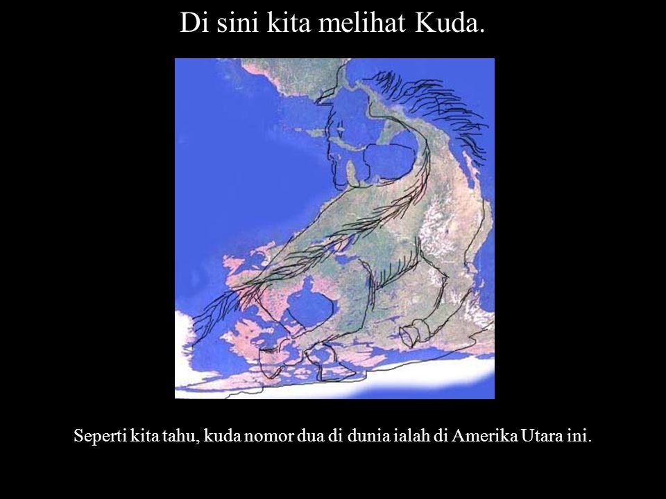 Nama: Kuda Nabi Sulaiman.1 Ukuran : 100 cm x 90cm Kawasan : Amerika Utara Pelukis: Fahmi Basya