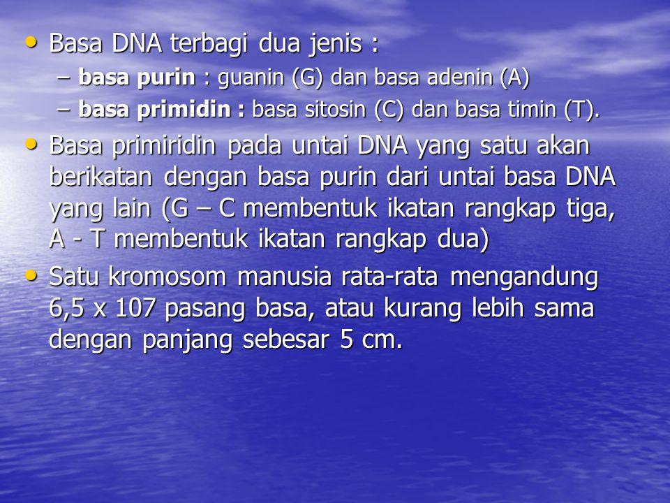 Basa DNA terbagi dua jenis : Basa DNA terbagi dua jenis : –basa purin : guanin (G) dan basa adenin (A) –basa primidin : basa sitosin (C) dan basa timi