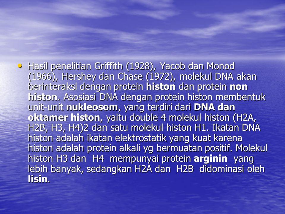 Hasil penelitian Griffith (1928), Yacob dan Monod (1966), Hershey dan Chase (1972), molekul DNA akan berinteraksi dengan protein histon dan protein no