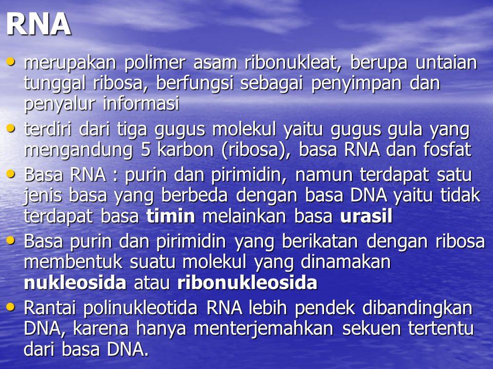 RNA merupakan polimer asam ribonukleat, berupa untaian tunggal ribosa, berfungsi sebagai penyimpan dan penyalur informasi merupakan polimer asam ribon