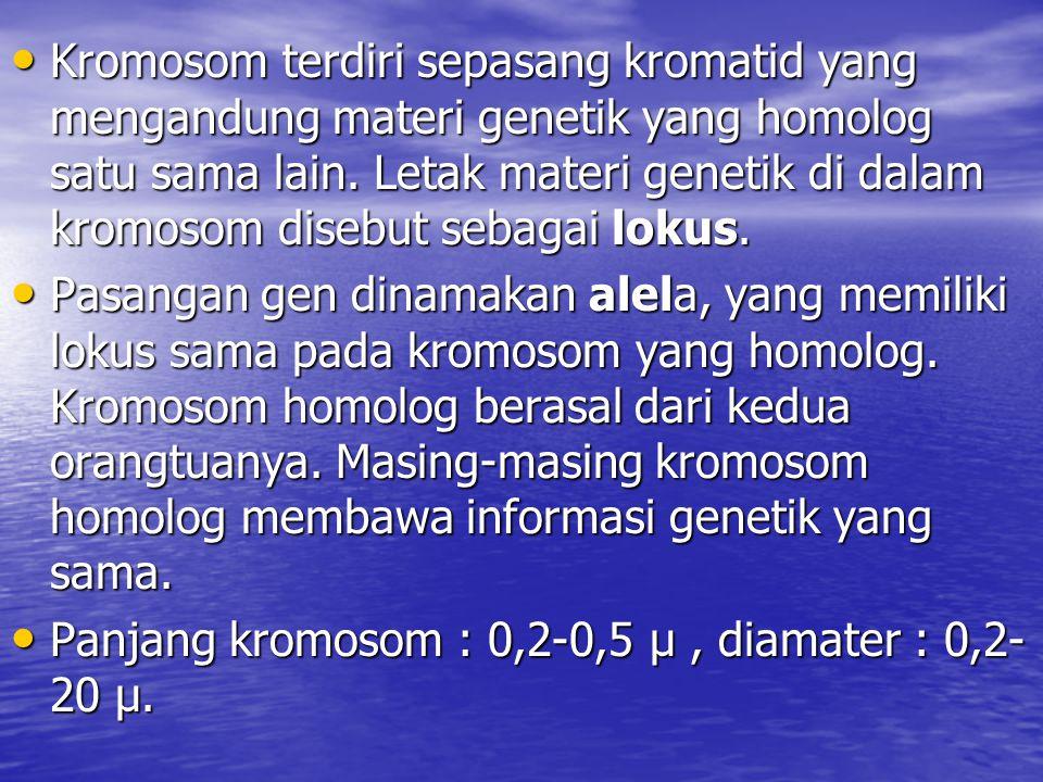 Kromosom terdiri sepasang kromatid yang mengandung materi genetik yang homolog satu sama lain. Letak materi genetik di dalam kromosom disebut sebagai