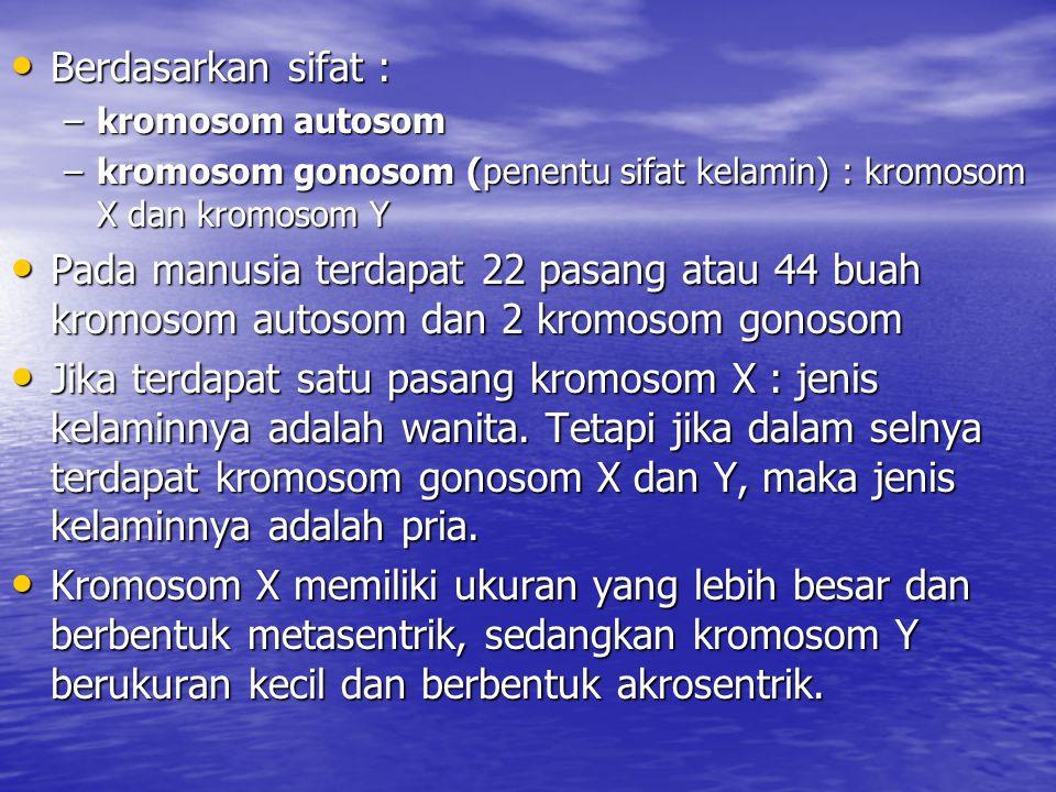 Berdasarkan sifat : Berdasarkan sifat : –kromosom autosom –kromosom gonosom (penentu sifat kelamin) : kromosom X dan kromosom Y Pada manusia terdapat