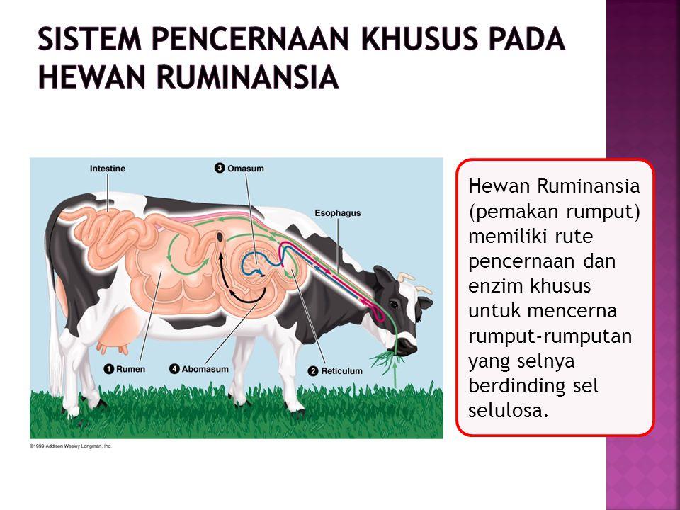Hewan Ruminansia (pemakan rumput) memiliki rute pencernaan dan enzim khusus untuk mencerna rumput-rumputan yang selnya berdinding sel selulosa.