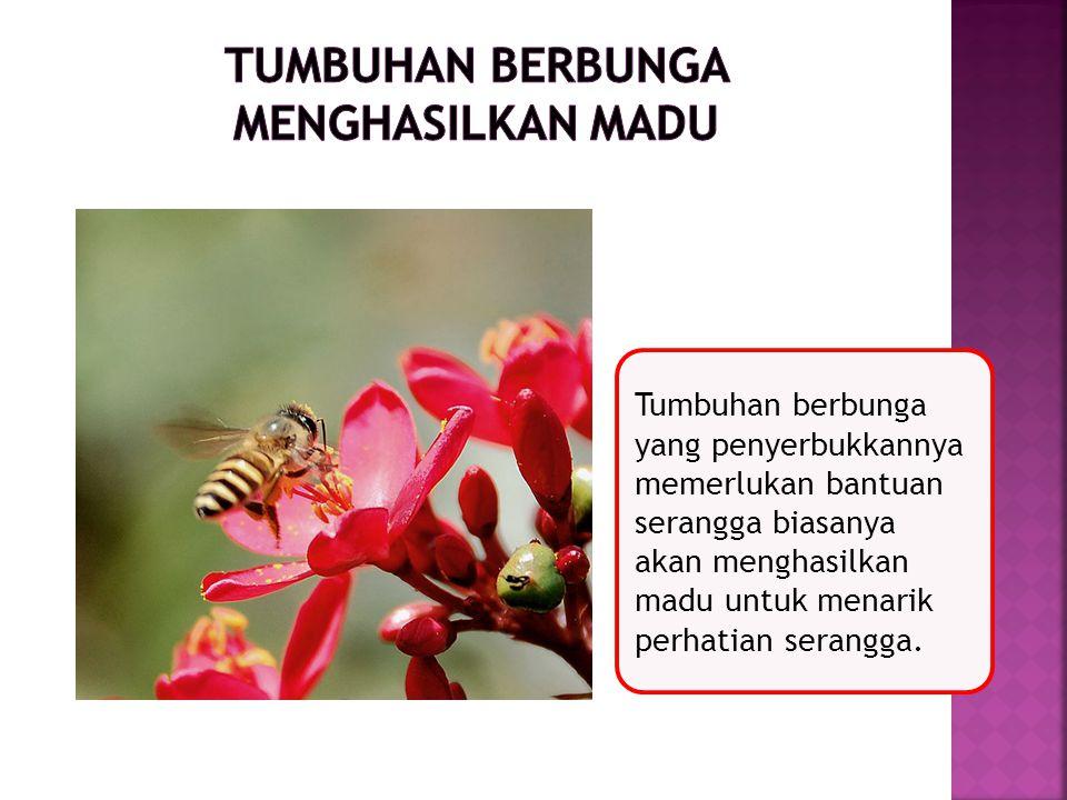 Tumbuhan berbunga yang penyerbukkannya memerlukan bantuan serangga biasanya akan menghasilkan madu untuk menarik perhatian serangga.