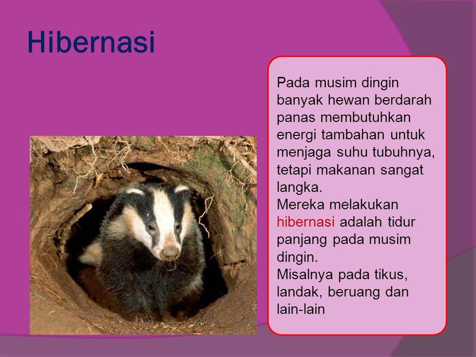 Hibernasi Pada musim dingin banyak hewan berdarah panas membutuhkan energi tambahan untuk menjaga suhu tubuhnya, tetapi makanan sangat langka. Mereka