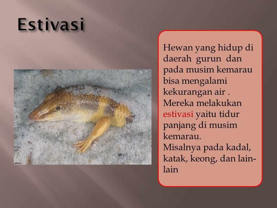 Hewan yang hidup di daerah gurun dan pada musim kemarau bisa mengalami kekurangan air. Mereka melakukan estivasi yaitu tidur panjang di musim kemarau.