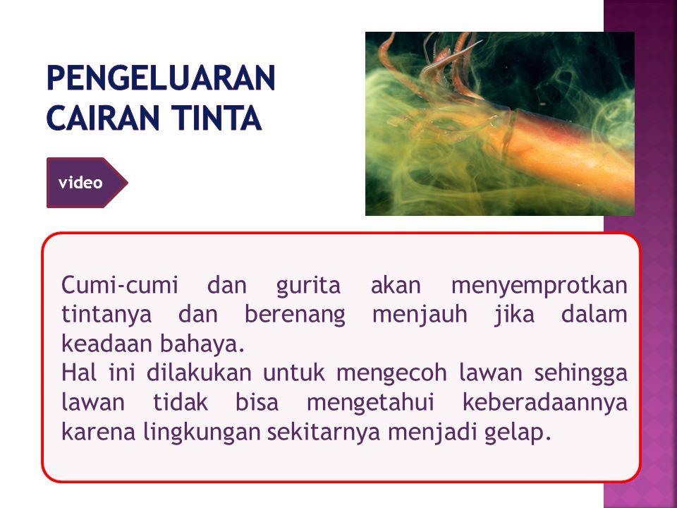 Cumi-cumi dan gurita akan menyemprotkan tintanya dan berenang menjauh jika dalam keadaan bahaya. Hal ini dilakukan untuk mengecoh lawan sehingga lawan