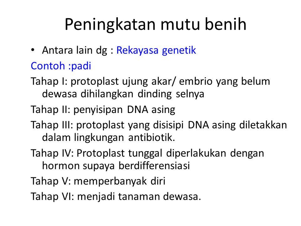Peningkatan mutu benih Antara lain dg : Rekayasa genetik Contoh :padi Tahap I: protoplast ujung akar/ embrio yang belum dewasa dihilangkan dinding selnya Tahap II: penyisipan DNA asing Tahap III: protoplast yang disisipi DNA asing diletakkan dalam lingkungan antibiotik.