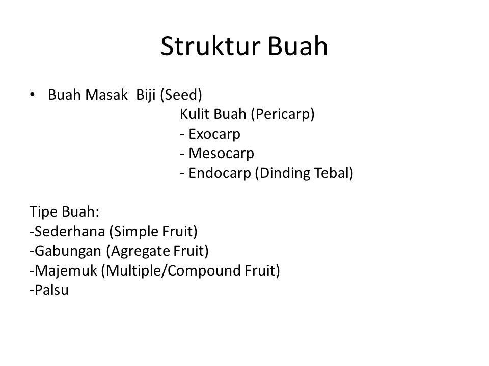 Struktur Buah Buah Masak Biji (Seed) Kulit Buah (Pericarp) - Exocarp - Mesocarp - Endocarp (Dinding Tebal) Tipe Buah: -Sederhana (Simple Fruit) -Gabungan (Agregate Fruit) -Majemuk (Multiple/Compound Fruit) -Palsu