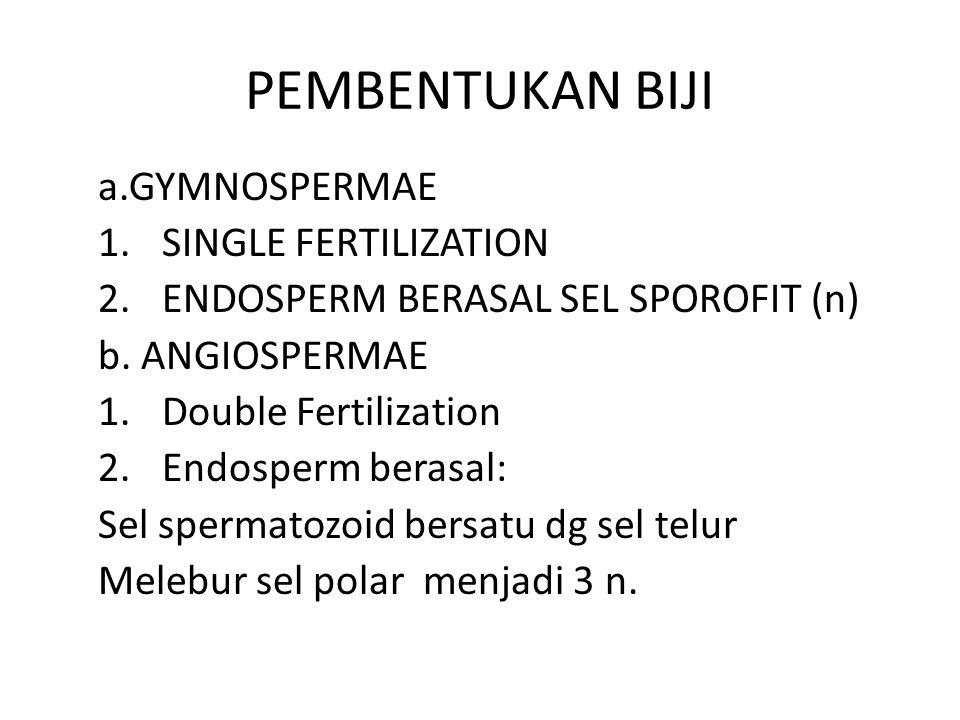 PEMBENTUKAN BIJI a.GYMNOSPERMAE 1.SINGLE FERTILIZATION 2.ENDOSPERM BERASAL SEL SPOROFIT (n) b.