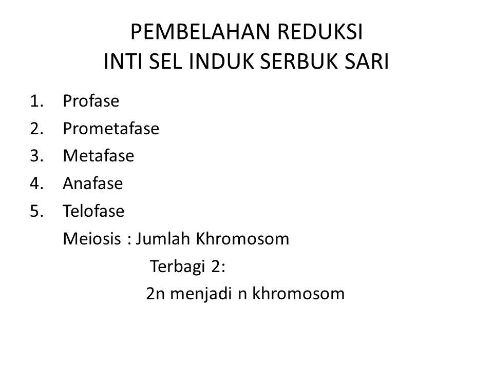 PEMBELAHAN REDUKSI INTI SEL INDUK SERBUK SARI 1.Profase 2.Prometafase 3.Metafase 4.Anafase 5.Telofase Meiosis : Jumlah Khromosom Terbagi 2: 2n menjadi n khromosom
