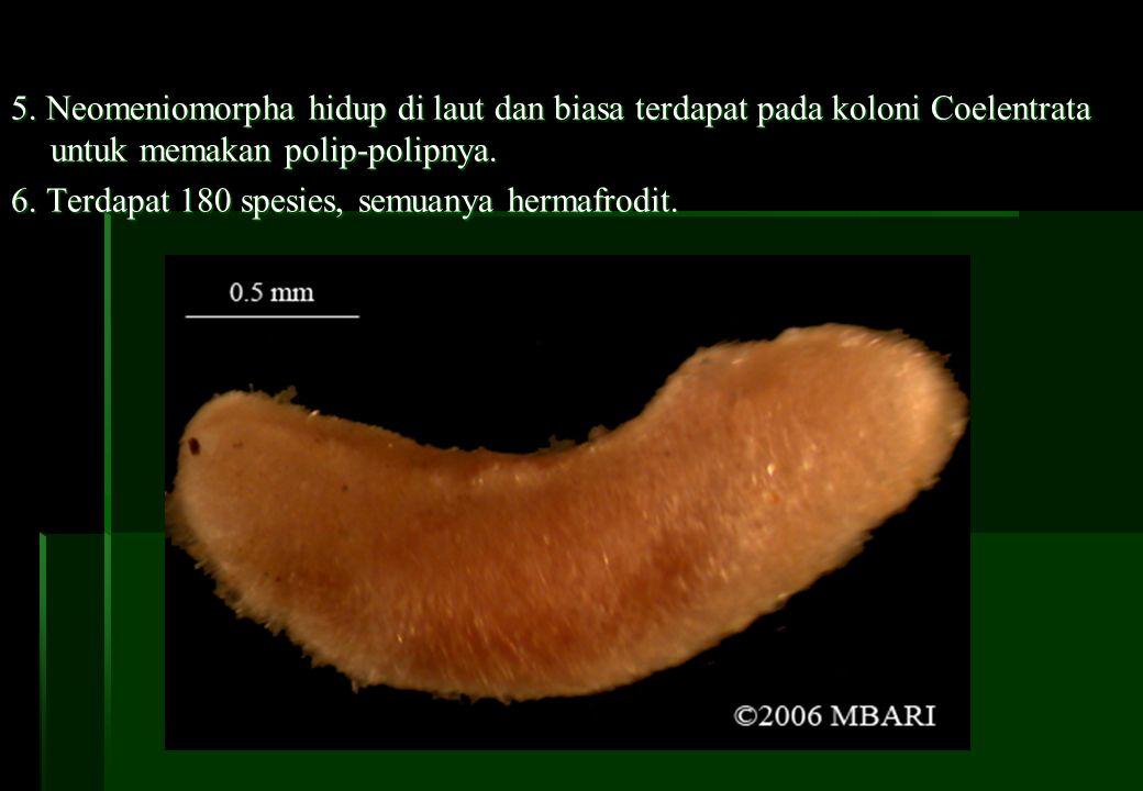 C.KELAS MONOPLACOPHORA 1.Bentuk tubuh seperti siput kecil, berukuran 3 mm–3 cm.