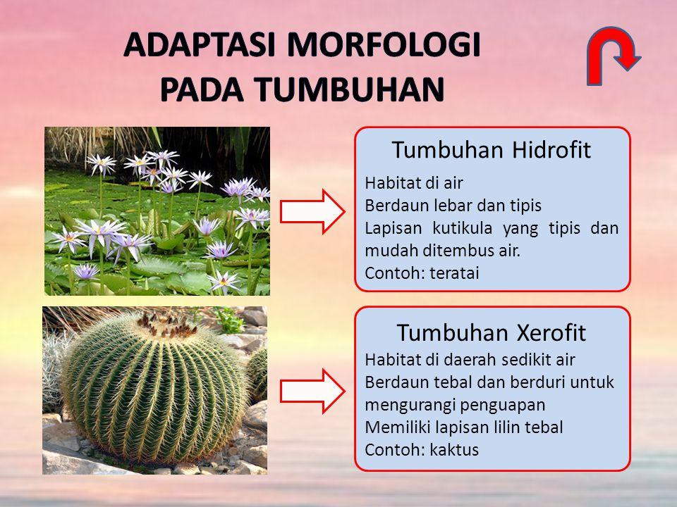 Tumbuhan Hidrofit Habitat di air Berdaun lebar dan tipis Lapisan kutikula yang tipis dan mudah ditembus air.