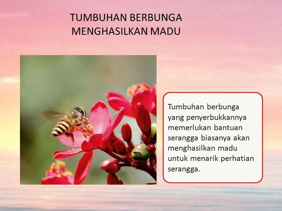 TUMBUHAN BERBUNGA MENGHASILKAN MADU Tumbuhan berbunga yang penyerbukkannya memerlukan bantuan serangga biasanya akan menghasilkan madu untuk menarik perhatian serangga.
