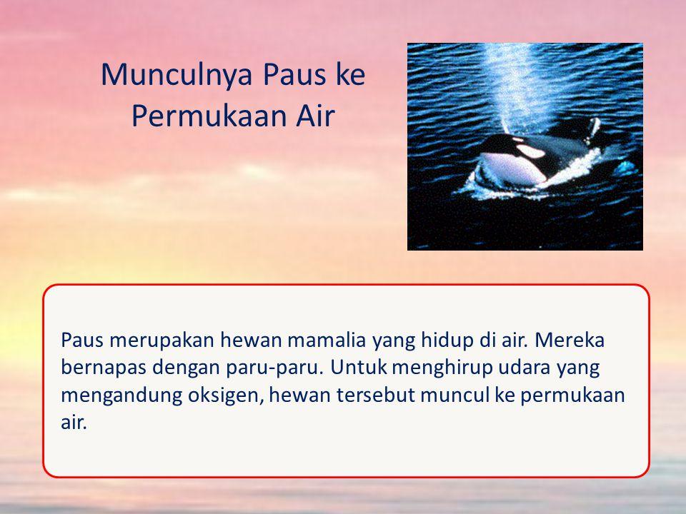 Munculnya Paus ke Permukaan Air Paus merupakan hewan mamalia yang hidup di air.