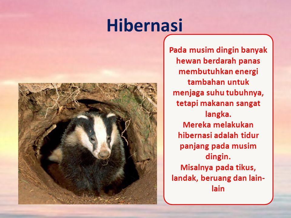 Hibernasi Pada musim dingin banyak hewan berdarah panas membutuhkan energi tambahan untuk menjaga suhu tubuhnya, tetapi makanan sangat langka.