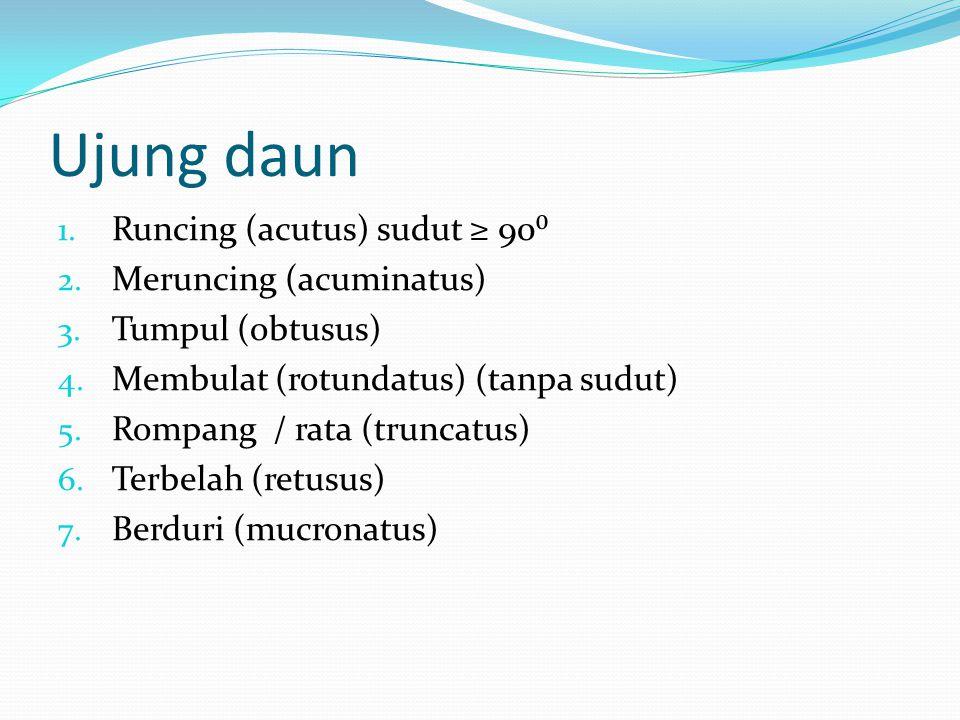 Ujung daun 1. Runcing (acutus) sudut ≥ 90⁰ 2. Meruncing (acuminatus) 3. Tumpul (obtusus) 4. Membulat (rotundatus) (tanpa sudut) 5. Rompang / rata (tru