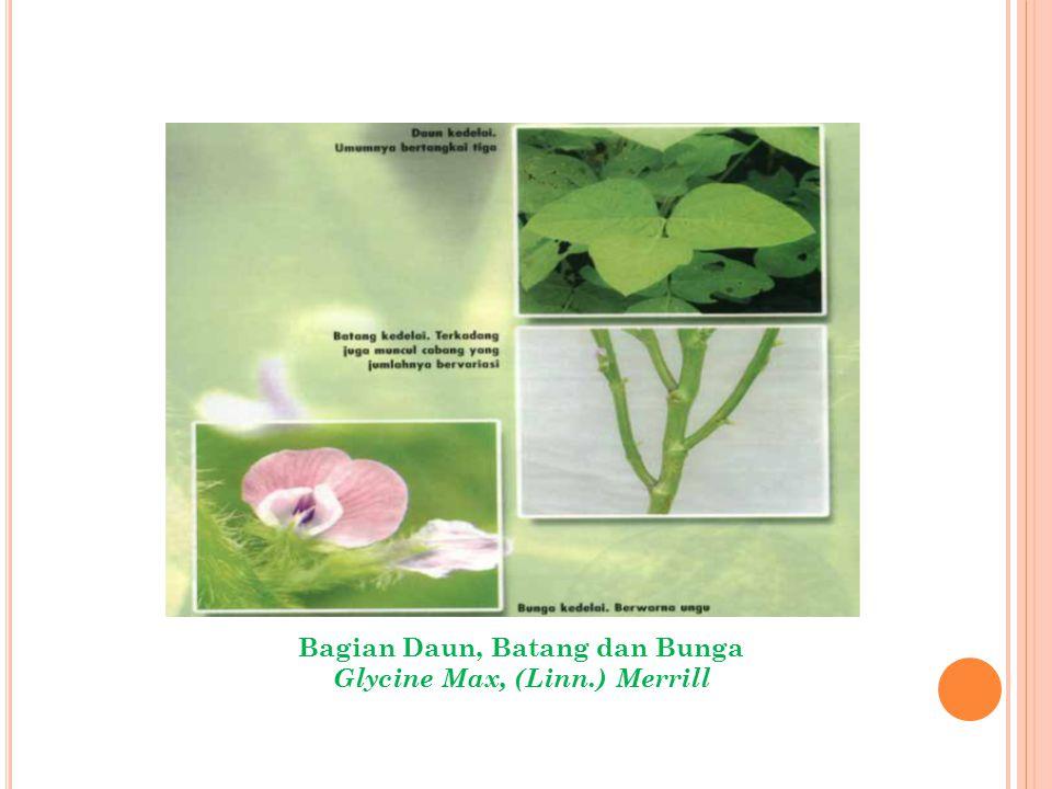 Bagian Daun, Batang dan Bunga Glycine Max, (Linn.) Merrill