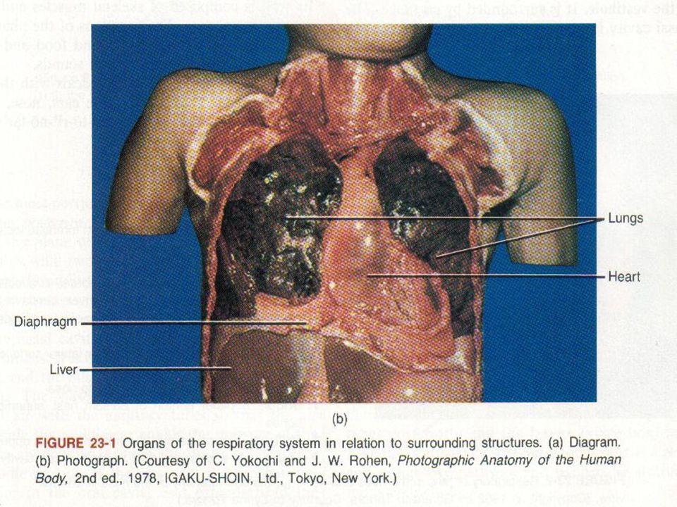 TBC Penyakit infeksi menular yang disebabkan oleh kuman Mycobacterium tuberculosis