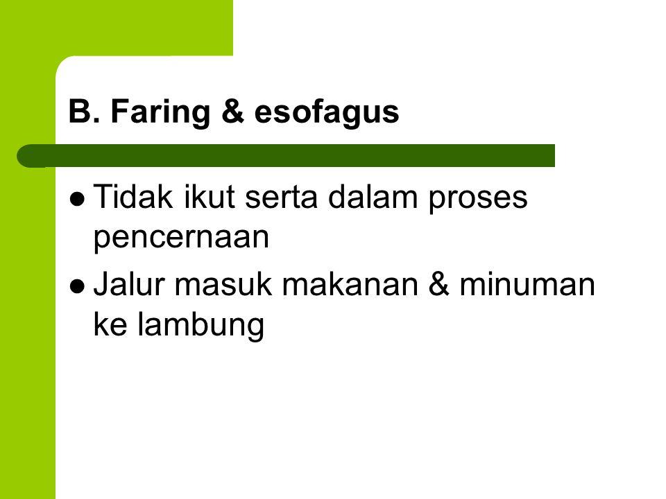 B. Faring & esofagus Tidak ikut serta dalam proses pencernaan Jalur masuk makanan & minuman ke lambung