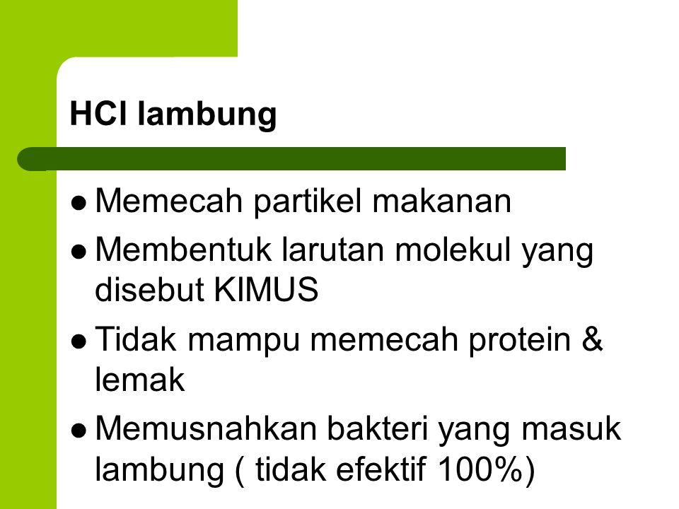 HCl lambung Memecah partikel makanan Membentuk larutan molekul yang disebut KIMUS Tidak mampu memecah protein & lemak Memusnahkan bakteri yang masuk l