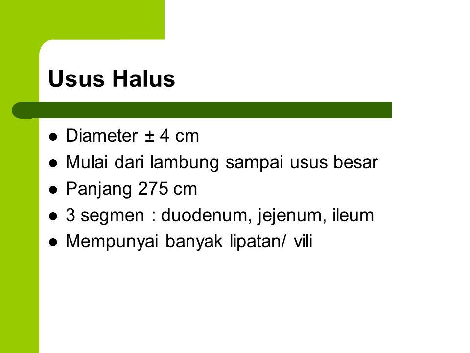 Usus Halus Diameter ± 4 cm Mulai dari lambung sampai usus besar Panjang 275 cm 3 segmen : duodenum, jejenum, ileum Mempunyai banyak lipatan/ vili