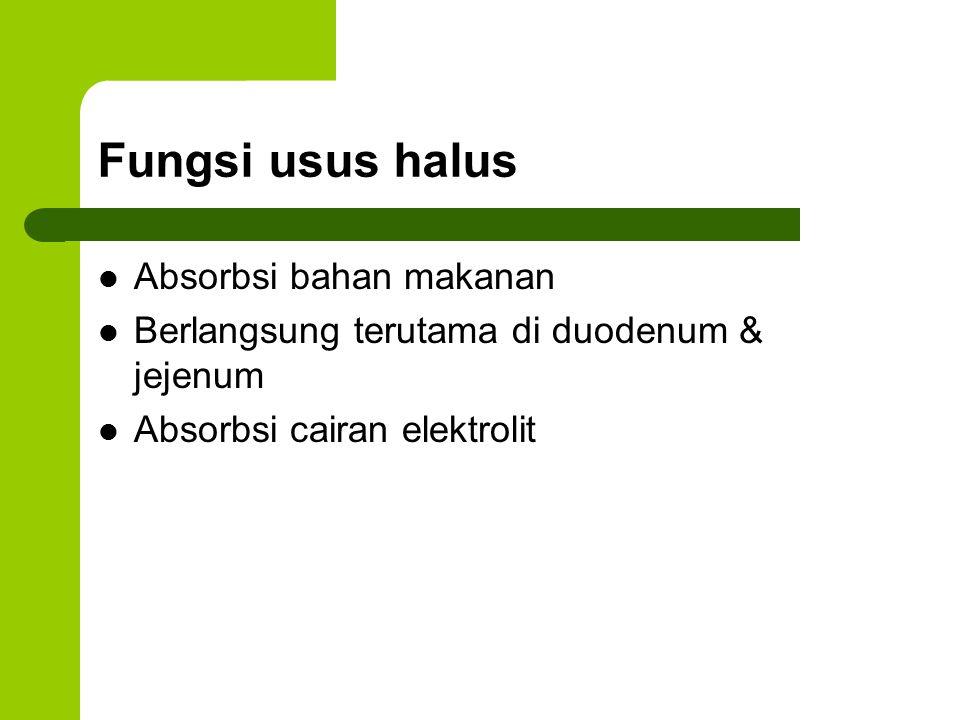 Fungsi usus halus Absorbsi bahan makanan Berlangsung terutama di duodenum & jejenum Absorbsi cairan elektrolit