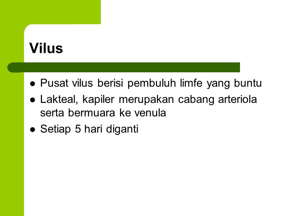 Vilus Pusat vilus berisi pembuluh limfe yang buntu Lakteal, kapiler merupakan cabang arteriola serta bermuara ke venula Setiap 5 hari diganti