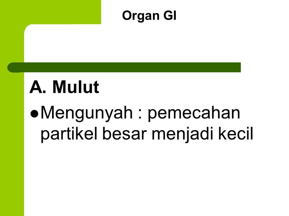 Organ GI A. Mulut Mengunyah : pemecahan partikel besar menjadi kecil