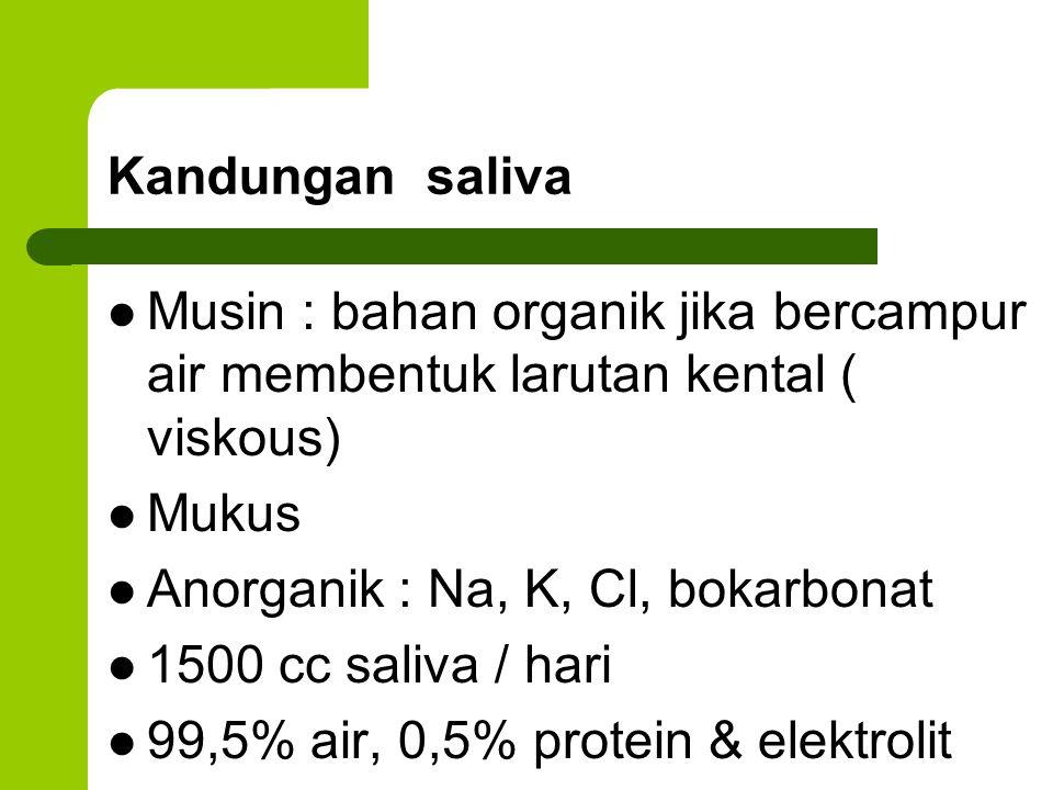 Kandungan saliva Musin : bahan organik jika bercampur air membentuk larutan kental ( viskous) Mukus Anorganik : Na, K, Cl, bokarbonat 1500 cc saliva /