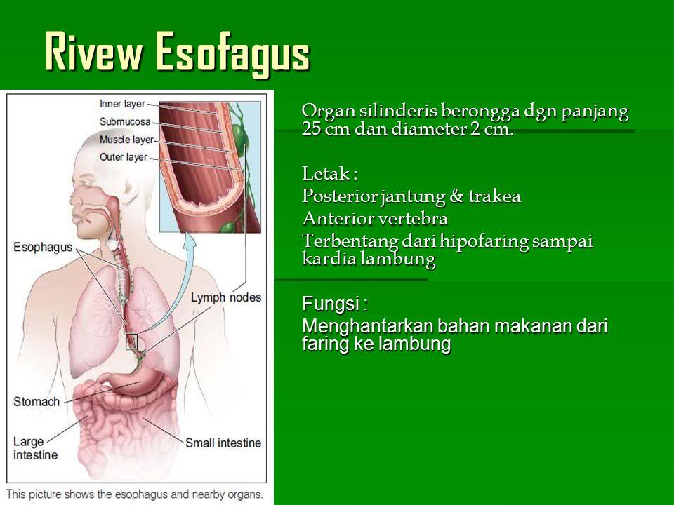 Anatomi Esofagus Anatomi Esofagus Pada kedua ujung esofagus terdapat spingter Pada kedua ujung esofagus terdapat spingter Krikofaringeus – sfingter esofagus bag.