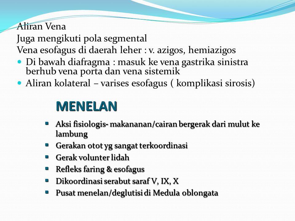 Aliran Vena Juga mengikuti pola segmental Vena esofagus di daerah leher : v. azigos, hemiazigos Di bawah diafragma : masuk ke vena gastrika sinistra b
