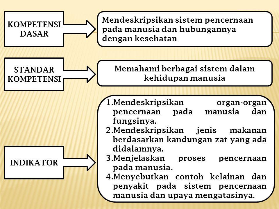 KOMPETENSI DASAR STANDAR KOMPETENSI INDIKATOR Mendeskripsikan sistem pencernaan pada manusia dan hubungannya dengan kesehatan Memahami berbagai sistem dalam kehidupan manusia 1.Mendeskripsikan organ-organ pencernaan pada manusia dan fungsinya.