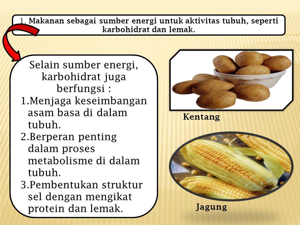 1.Makanan sebagai sumber energi untuk aktivitas tubuh, seperti karbohidrat dan lemak.