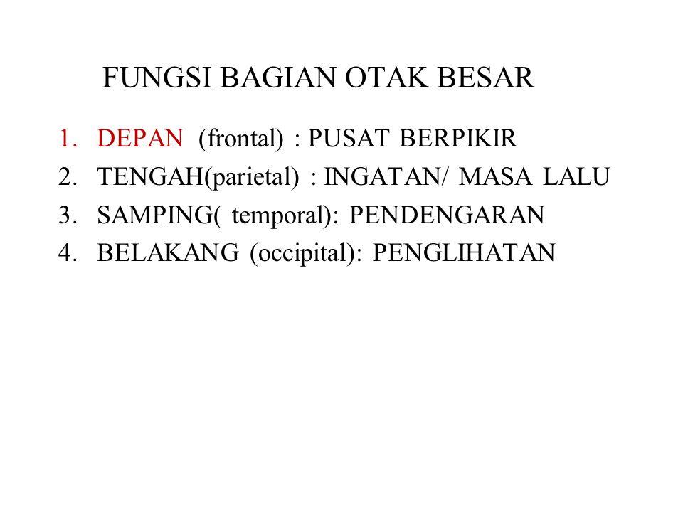 FUNGSI BAGIAN OTAK BESAR 1.DEPAN (frontal) : PUSAT BERPIKIR 2.TENGAH(parietal) : INGATAN/ MASA LALU 3.SAMPING( temporal): PENDENGARAN 4.BELAKANG (occi