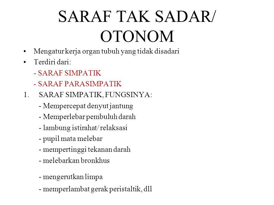 SARAF TAK SADAR/ OTONOM Mengatur kerja organ tubuh yang tidak disadari Terdiri dari: - SARAF SIMPATIK - SARAF PARASIMPATIK 1.SARAF SIMPATIK, FUNGSINYA