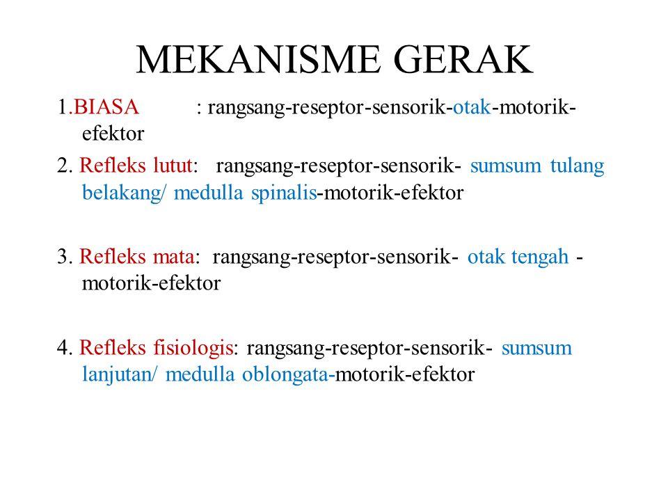 MEKANISME GERAK 1.BIASA : rangsang-reseptor-sensorik-otak-motorik- efektor 2. Refleks lutut: rangsang-reseptor-sensorik- sumsum tulang belakang/ medul