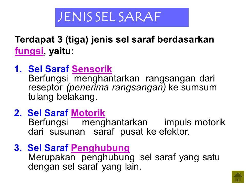 Saraf Sensorik