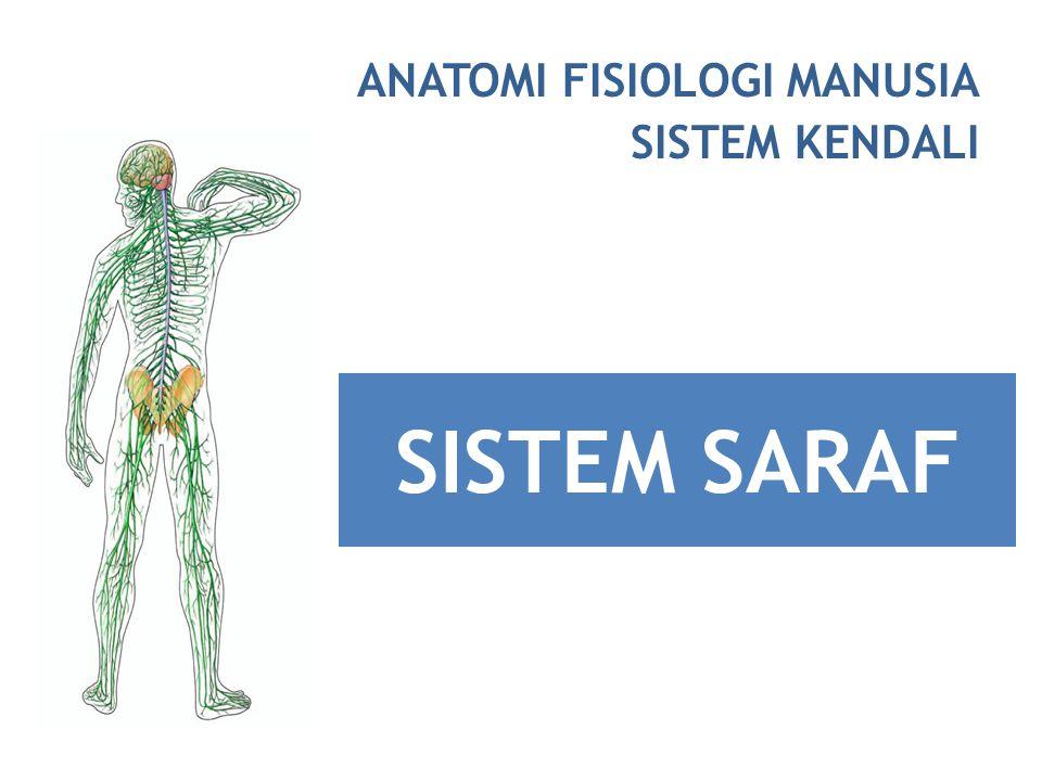 sistem saraf tepi 31 pasang saraf spinal (serabut motorik, sensorik menyebar pada ekstremitas & dinding tubuh) 12 pasang saraf kranial (serabut motorik saja, sensorik saja, atau campuran keduanya menyebar di daerah leher & kepala)